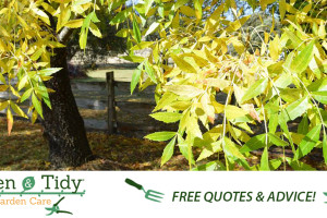 FB_Green_and_Tidy_1200x628