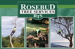 rosebud_tree_services