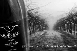 Morgan_Vineyards_Seville